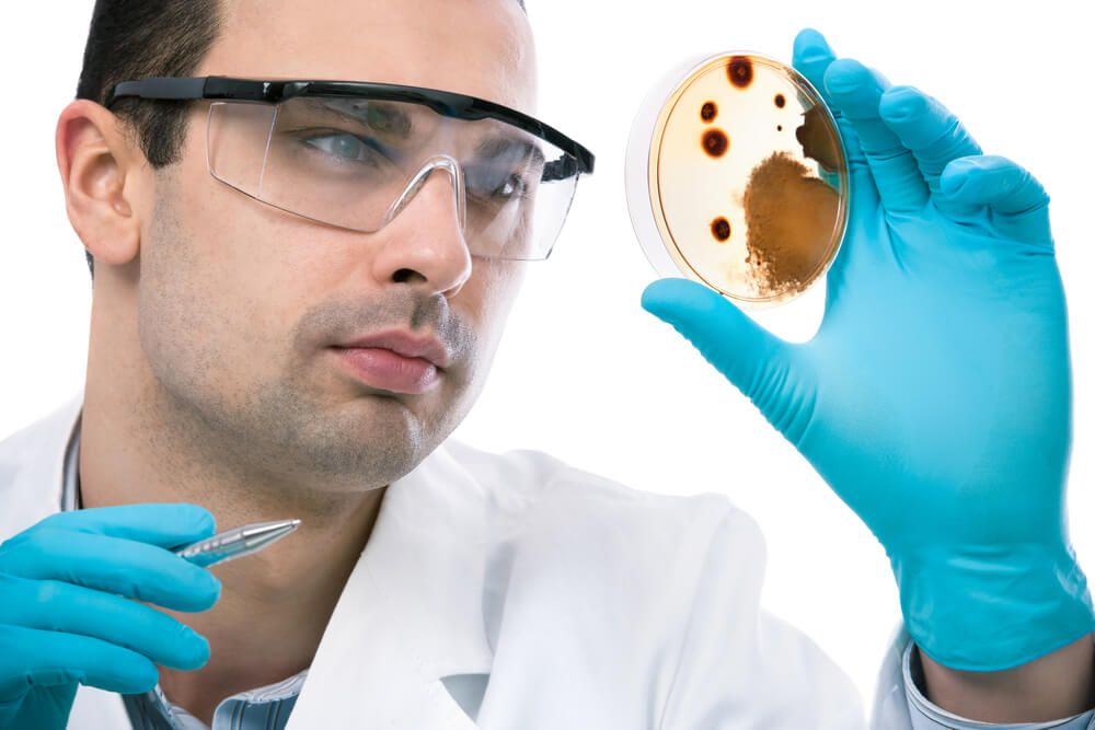 Scientist examining mold