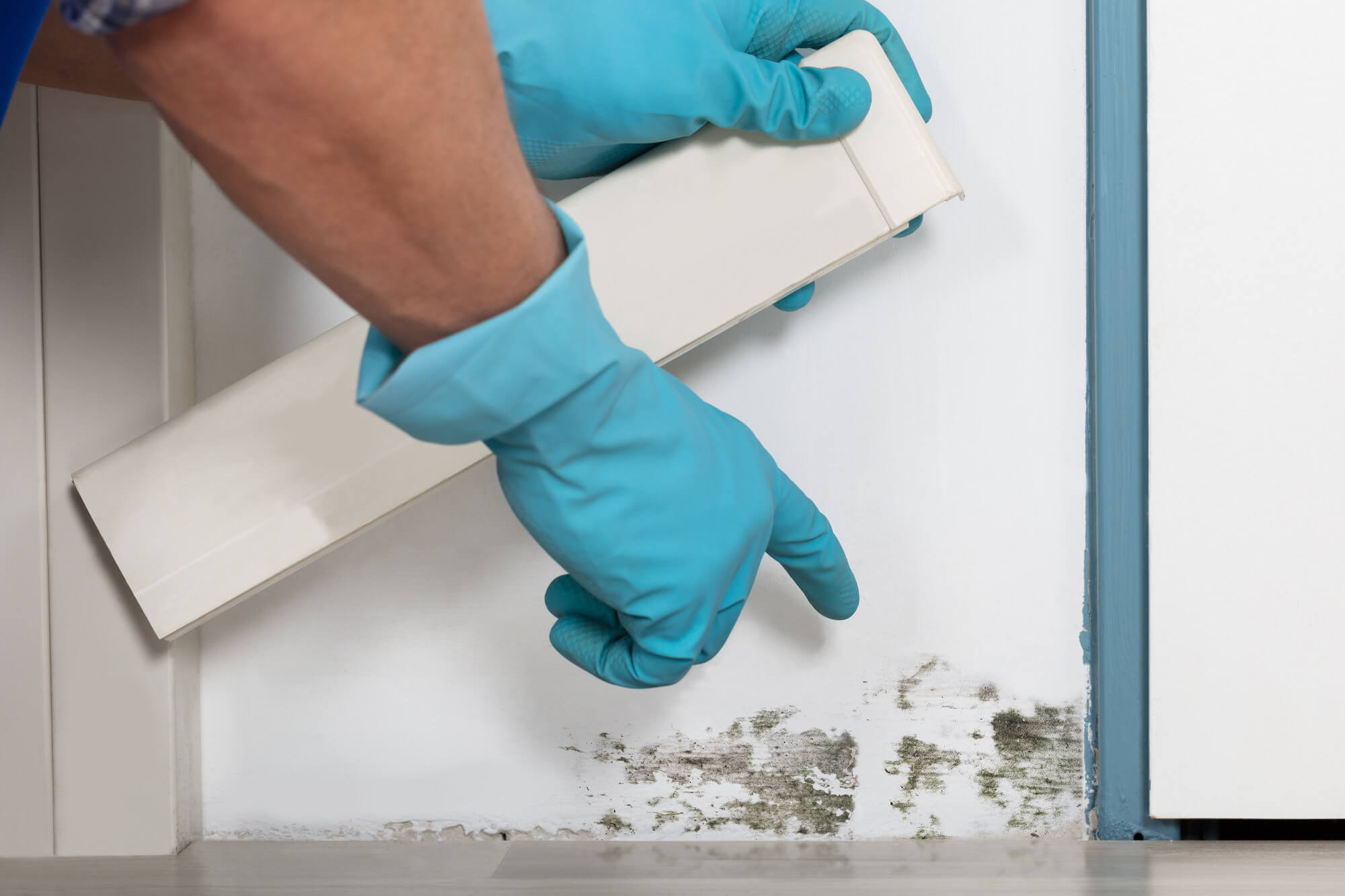 Cleaning mold on wall