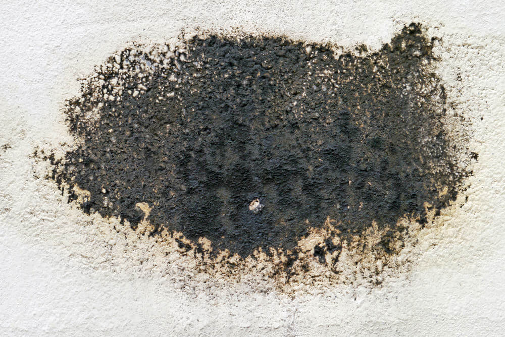 Concentrated mold growth